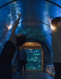 Gay twink blake mitchell and cole claire at the aquarium - part 767